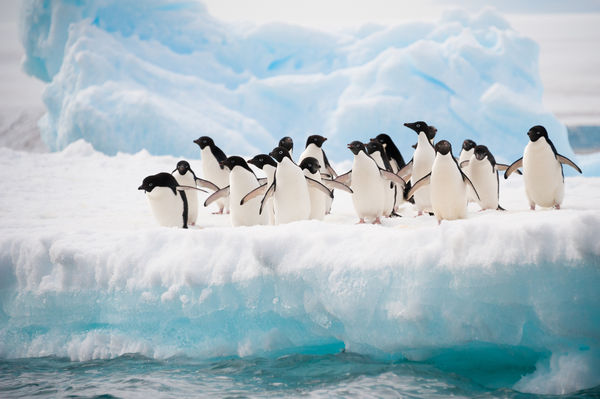 Best of Antarctica Tours holiday experience